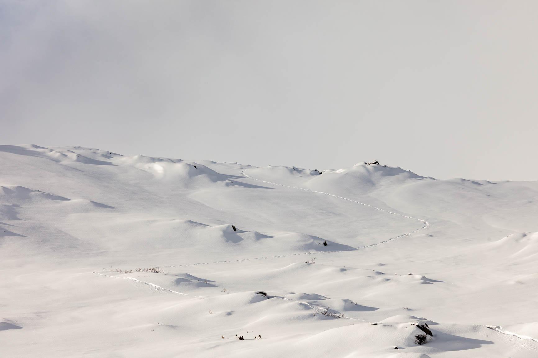 Naturfotografi Dovrefjell