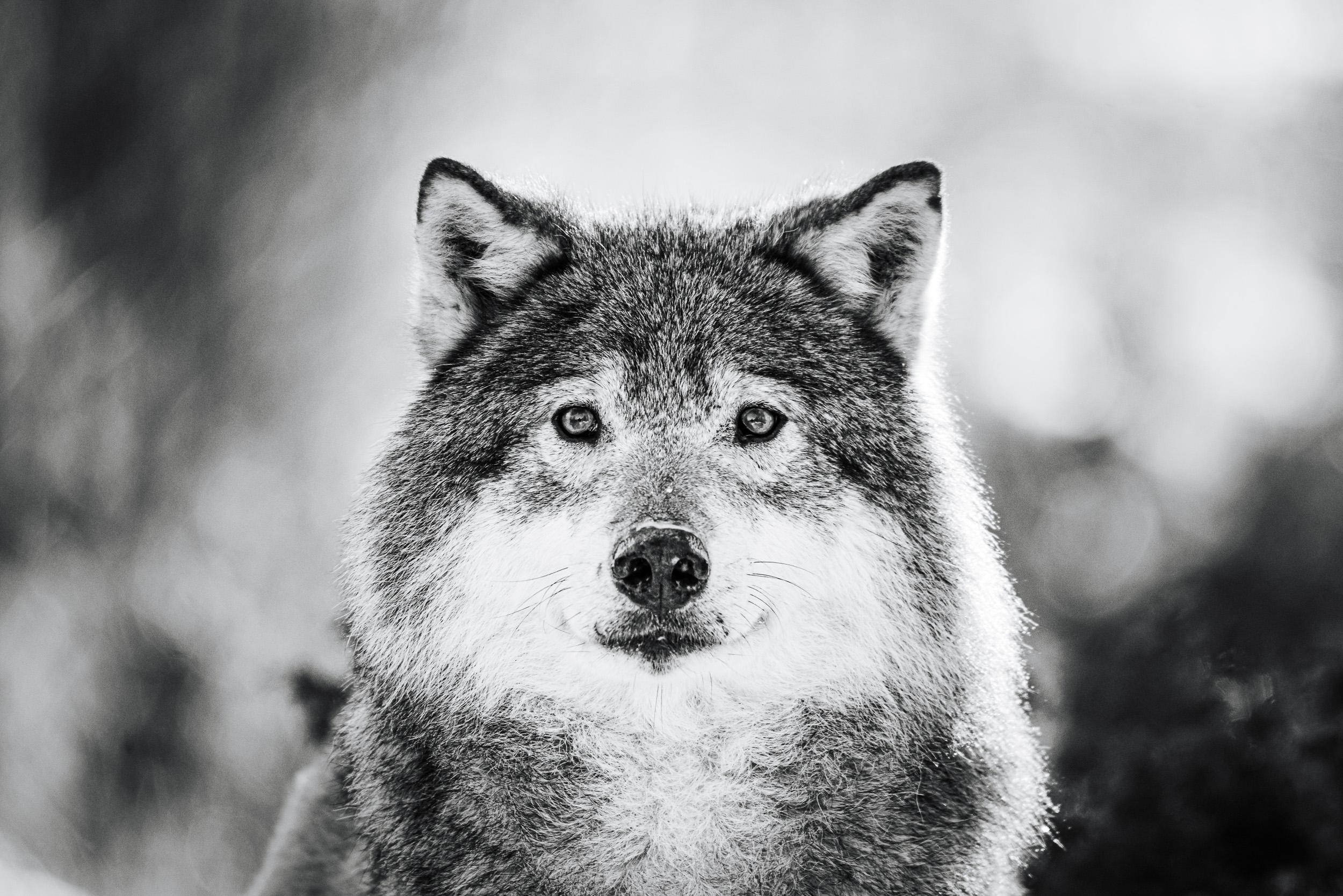Ulvekontakt