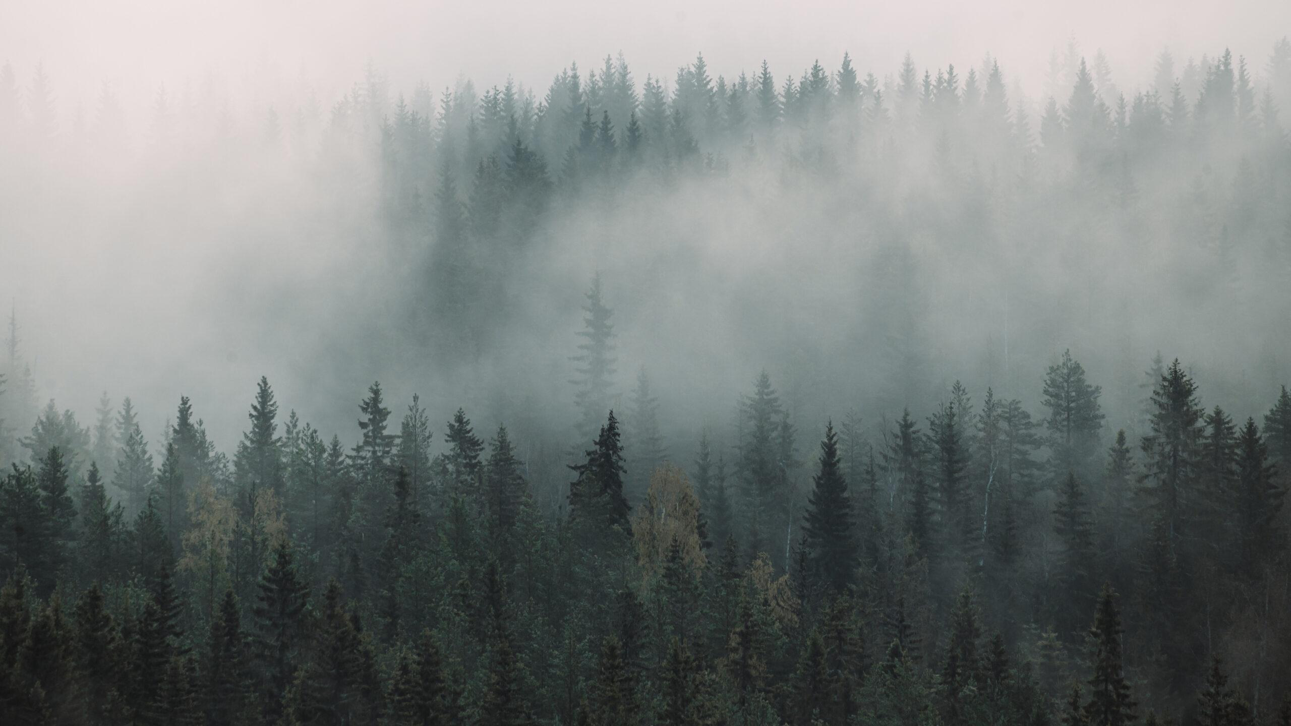 Tåkeskogen